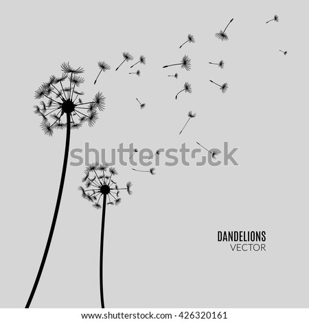 Vector Dandelion silhouette. Flying dandelion buds black on gray - stock vector