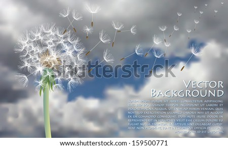 vector dandelion with flying seeds on stormy sky - stock vector