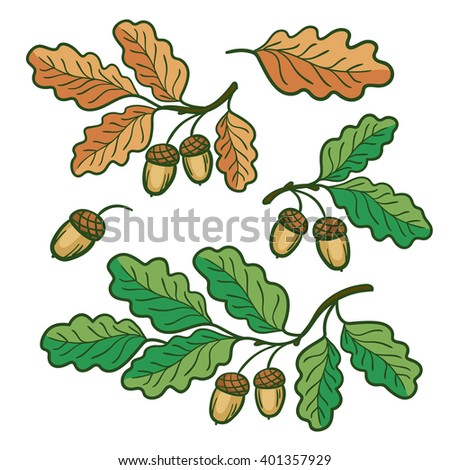 vector design element, a set of oak twigs, yellow and green leaves, acorns, tree, forest, nature, summer, autumn - stock vector