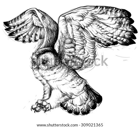 hand drawing of a flying owl