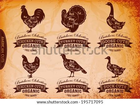 vector diagram cut carcasses chicken, turkey, goose, duck - stock vector