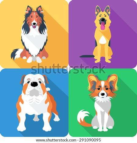 Vector dog Rough collie, Papillon, German shepherd and English Bulldog breed face icon flat design  - stock vector