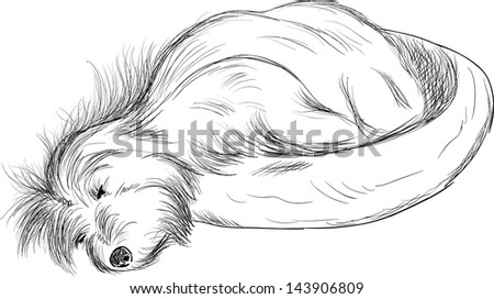 vector - Dog sleeping in dog bed ( Cotton de Tulear) , isolated on background