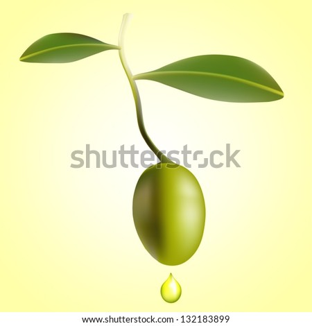Vector draw(eps 10) Olive with leaves and drop of oil over a bright background - stock vector