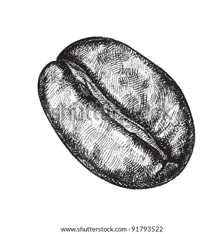 vector draw of a coffee bean