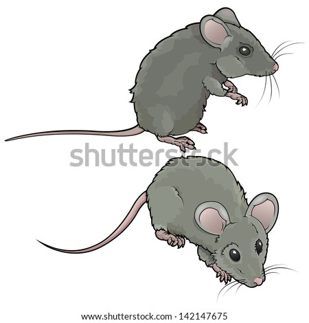 Vector drawing/Mice/Vector drawing, easy to edit layers, easy to edit grouped objects, No meshes no gradients used, each mouse is isolated and grouped easy to edit - stock vector