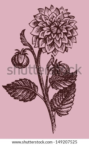 Vector drawing monohramny branches dahlias with buds and leaves - stock vector