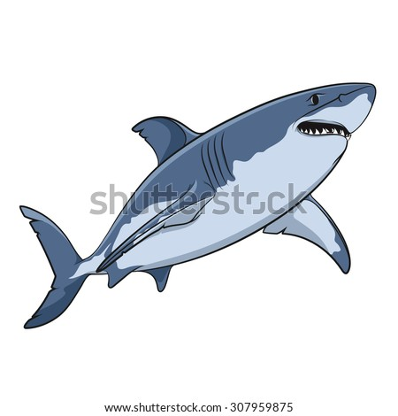 Vector drawing of a great white shark. Isolated objects on a white background. - stock vector