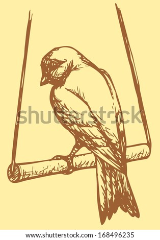 """Vector drawing of a series of monochrome sketches """"Birds"""". Domestic Canary is a small songbird in the finch family originating from the Macaronesian Islands (Azores, Madeira and Canary Islands) - stock vector"""