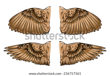 Vector drawing of / Bird Wings / Open and closed Bird wings, easy to edit layers and groups, EPS 10 Black and white outline file looks great too.  - stock vector
