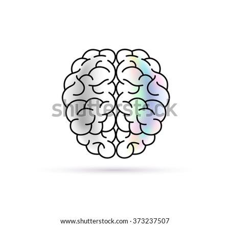 Human Brain Coloring Book Download Vector Drawing Medical Design Stock 373237507