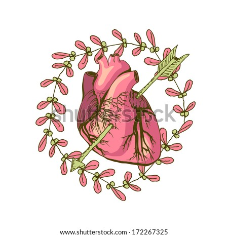Vector drawing of the heart, anatomical with decorative elements - stock vector