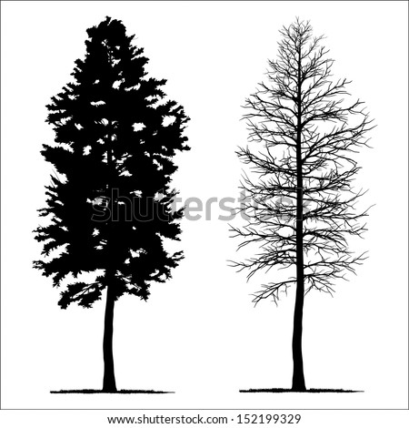 vector drawing of the tree - detailed vector  - stock vector