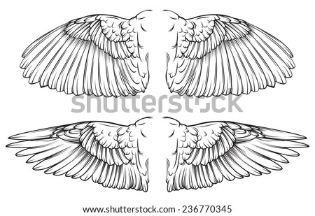 Vector drawing of /Wings Line art / Easy to edit groups, Line art outline file, black and white easy to isolate and edit.  - stock vector