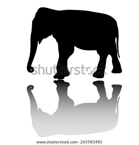 vector elephant silhouette with shadow isolated on white background - stock vector