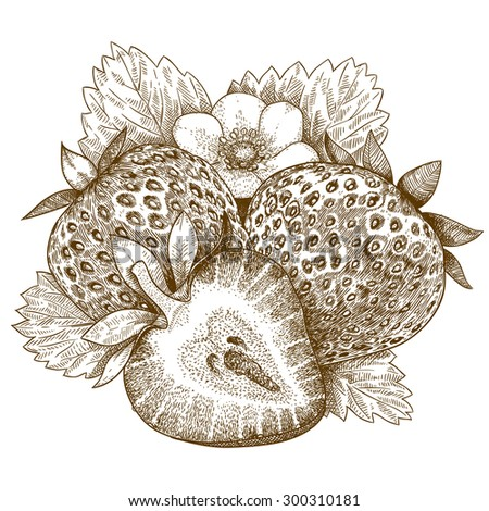 Vector engraving antique illustration of strawberry isolated on white background - stock vector