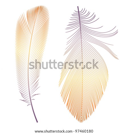Vector feathers - stock vector