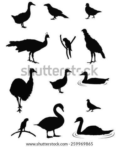 vector file of birds silhouette