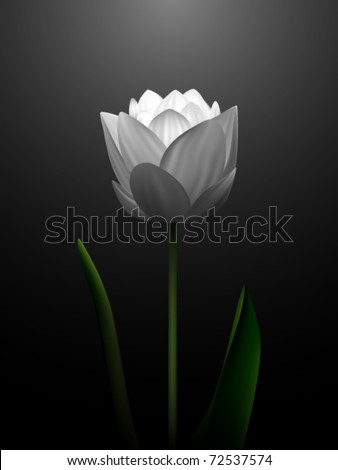 vector flower illustration - stock vector