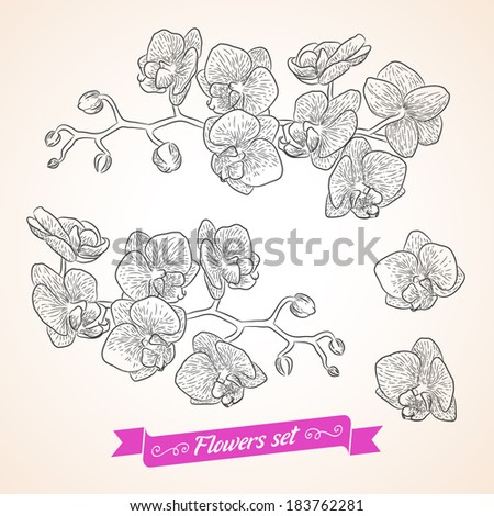 Vector flowers set. Collection of beautiful bouquets for your design - stock vector