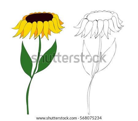 Vector Flowers Sunflower Coloring Book Cartoon