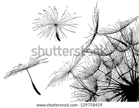 Vector. Flying parachutes from dandelion. - stock vector