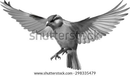 Sparrow Silhouette Flying House Sparrow S...