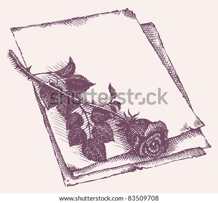 Vector frame. Sketch of cut roses on a sheet of old paper - stock vector