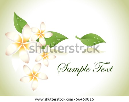 Vector frangipani - stock vector