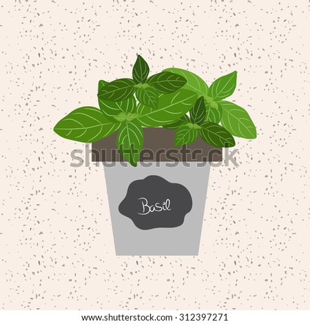Vector - Fresh basil herb in a flowerpot. Aromatic leaves used to season meats, poultry, stews, soups, bouquet granny - stock vector