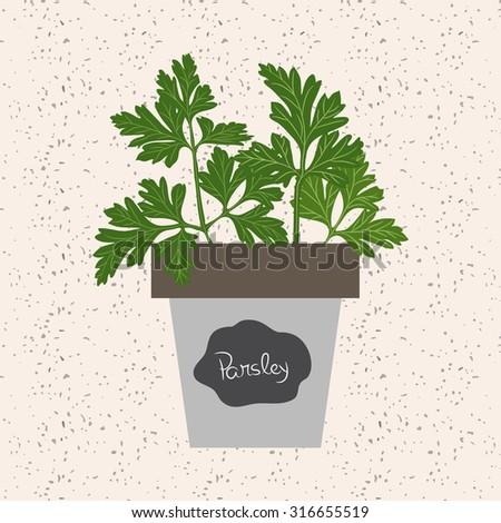 Vector - Fresh parsley herb in a flowerpot. - stock vector
