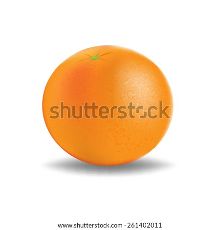 Vector fresh ripe orange - stock vector