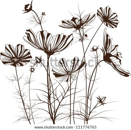 Vector garden flowers, Cosmos bipinnatus - stock vector