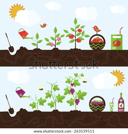 Vector garden illustration in flat style. Planting apple trees, harvesting, processing apples into juice. Planting grapes, harvesting, processing grapes into juice and wine.