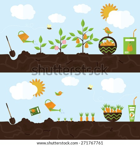 Vector garden illustration in flat style. Planting pear trees, harvesting, processing pear into juice. Planting carrots, harvesting, processing carrots into juice.