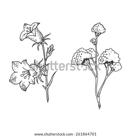 The Carnations Scorpion Fireball Mail