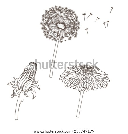 Vector graphic illustration with dandelions - stock vector