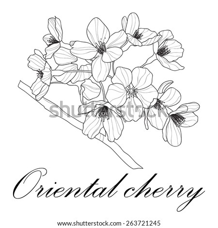 Vector graphic illustration with oriental cherry - stock vector