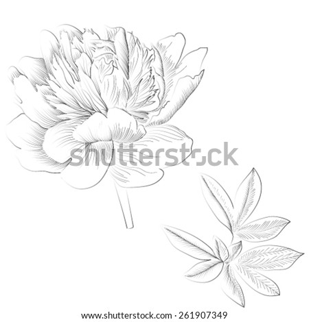 Vector  graphic illustration with peony