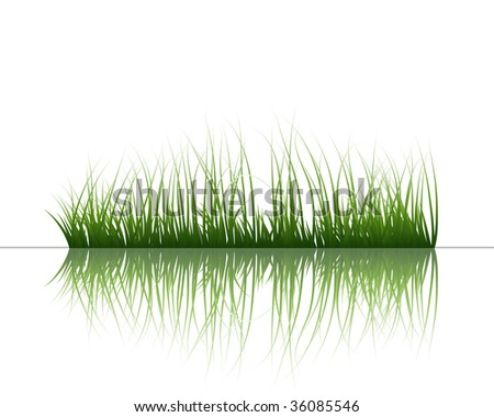 Vector grass silhouettes background with reflection in water. All objects are separated. - stock vector