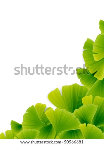 Vector Green Ginko Leaves - stock vector