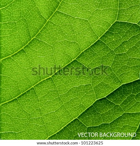 Vector green leaf macro background. - stock vector