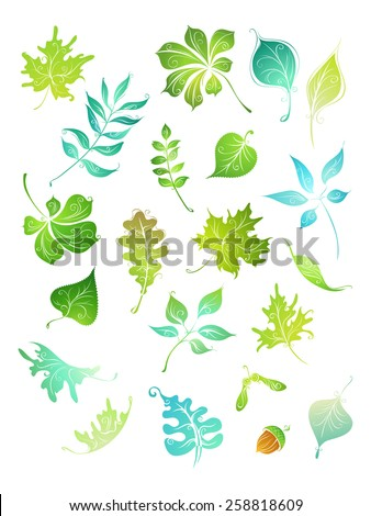 Vector green leaves. Hand-drawn nature elements for your design isolated on white background.