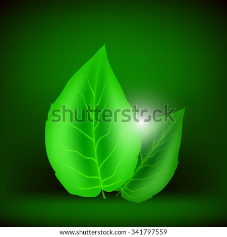 Vector Green Leaves Isolated on Soft Green Background. Eco Icon with Green Leaves. - stock vector