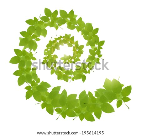 Vector green leaves on white background. Fresh green leaves. Green vector foliage. - stock vector