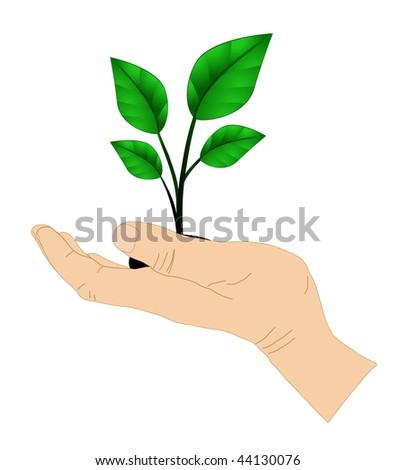 vector green plant in hand - stock vector