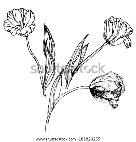 Vector hand drawing black and white tulips flowers