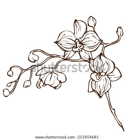 Vector hand drawing orchid flower - stock vector