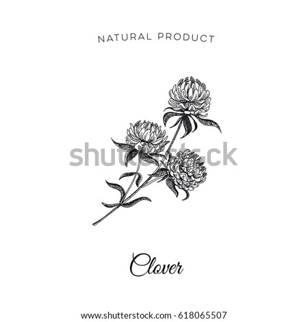 Clover Flower Template | Vector Hand Drawn Clover Flower Illustration Stock Vector 618065507