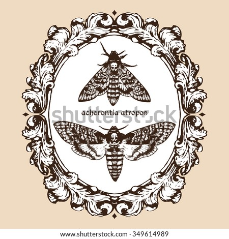 Vector hand drawn Deaths head hawk moths in frame illustration. Signature is the Latin name of the species - stock vector